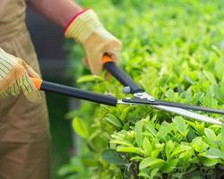 Fensch Coup de Main - Hayange - Nos services d'entretien de jardin